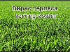 Герпес зостера (zoster) — что это за болезнь