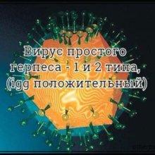 Вирус простого герпеса — 1 и 2 типа, (igg положительный)